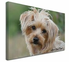More details for yorkie dog 'love you dad' x-large 30