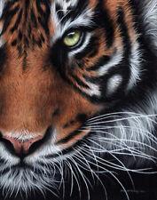 Tiger ORIGINAL Oil painting by SARAH STRIBBLING