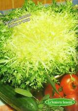 400 Semi/Seeds INDIVIA Riccia a Cuore D'oro