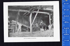 Sugar Cane Grinding in the Philippines -  1901 Vintage Print