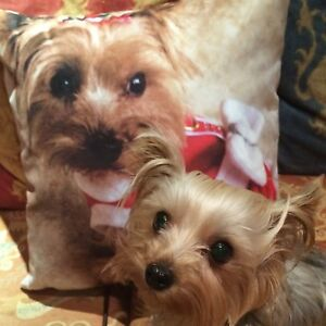 YORKSHIRE TERRIER CHRISTMAS SCATTER CUSHION ( 18 X 18 INCHES )