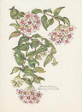 Künstler Karte - Anna-Maria Schwarz-Torinus / Wachsblume