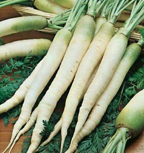 Carrot Blanche A Collet Vert - 25+ seeds - Semillas - Graines - Samen