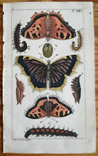 Wilhelm: Handcolored Engraving Butterfly Moth (19) - 1800