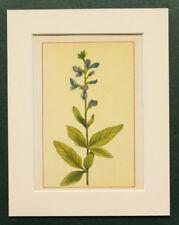 Lithograph Blue Floral Art Prints