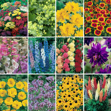 More details for complete hardy garden perennial plant collection - 24 plug plants