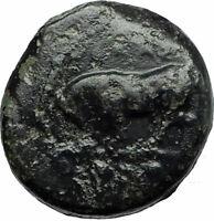 Gela in Sicily 420BC Trias Bull & River-god Gelas Ancient Greek Coin  i75824