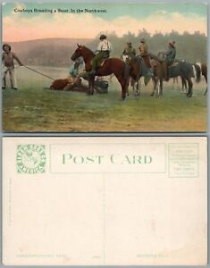 COWBOYS BRANDING A STEER IN THE NORTHWEST ANTIQUE POSTCARD