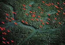 (09176) Postcard - Venezuela Cralet Ibis near Pedernales - large format