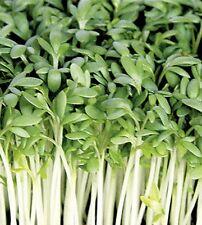 Kresse BIO Gartenkresse Einfache Samen
