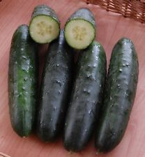 🥒 10 Samen Salatgurke Marketmore Gurke Landgurke Gurken Gurkensamen