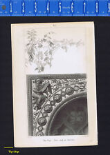 The Vine-Free and in Service, Drawn by John Ruskin, Engr by J. C. Armytage. 1853
