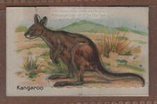 Kangaroo Australia Marsupial With Pop-Up Image 1920s Trade Ad Card