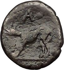 ARGOS in ARGOLIS 3-2CenBC Apollo Wolf RARE Authentic Ancient Greek Coin i56079