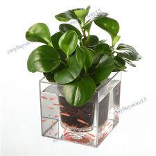 1x Self-Watering Aquarium Fish Tank With Planter Pot Plant Growth Flower Planter