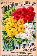 1898 Conard & Jones Fine Roses Vintage Flowers Seed Packet Advertisement Poster