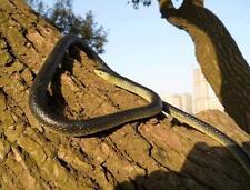 Rubber Lifelike Snakes Scary Gag Gift Funny Prank Joke Toy Snake for Kid Child