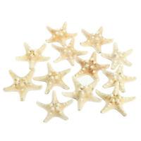 12 x White Knobby Starfish 5cm -7cm Sea Star Shell Beach Wedding Display Cr M5K2