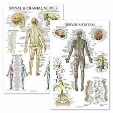 2 Pack - Spinal Nerves & Nervous System Anatomy Posters - Set of 2 Anatomical Ch