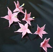 Tortenaufleger Zuckerblumen Hochzeit Muffins Fondant Tortendekor Kuchendeko rosa