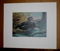 Black Ducks Kentucky 1987 Duck Stamp Print with Stamp by RJ McDonald waterfowl