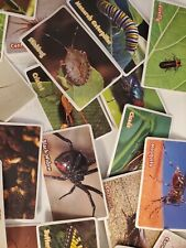 New listing Vintage Insect Trade Card A lots Price for all 36pc