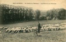 SUCY EN BRIE Vallée du Morbras Moutons au Pâturage Berger et son chien