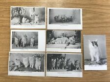 Vintage Cat Post Cards Wrench Series Postcards Kittens Edwardian Victorian