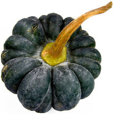 Pumpkin BLACK FUTSU-Pumpkin Seeds-JAPANESE CLASSIC-20 SEEDS