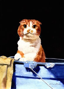"""BATH TIME"" SCOTTISH FOLD CAT FRAMED MINI ART PRINT DREW STROUBLE CATMANDREW"