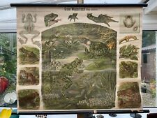 More details for early vintage frogs  school wall chart lithograph  schroeder & kull amphibians