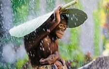 1e6908df8db Cute Monkey In The Rain - Animal Forest Landscape Wall Art Canvas Picture  20x30
