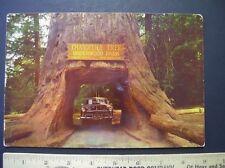 "Vintage Giant 9""X6"" R.P.P.C KODACHROME Glossy ~ Underwood Park, CA ~ Car in Tree"