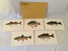 Set Of 5 Daisy Heddon Fish Prints Bass Bluegill Trout Walleye Fishing Art Lot