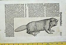 Gessner,Thierbuch,Beaver,Castor,Biber,Woodcut,1583