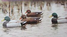 6 FLAMBEAU Classic Standard Mallard Duck Decoys 3 Drakes,3 Hens Weighted Keel