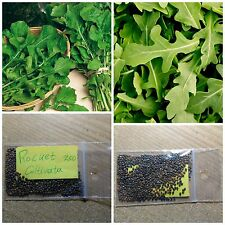 Rocket Rucola ''Coltivata'' ~250 Top Quality Seeds -  Amazing Healthy Vegetable!