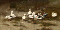 Oil painting domestic birds ducks together in landscape canvas