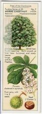 Horse Chestnut Tree Aesculus hippocastanum 1930s Trade Ad Card