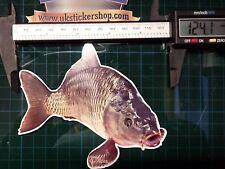 Carp Fish Sticker, Bait Angling Crafty Hunter Coarse fishing lure mirror common