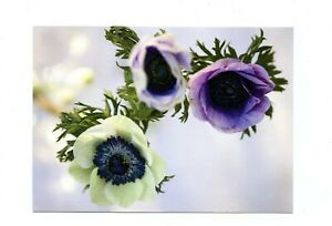 Aland Postal Card Flowers AL009