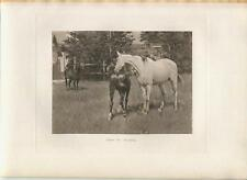 ANTIQUE VICTORIAN WHITE HORSE COLT DONKEY COUNTRY PASTURE MEADOW CORRAL PRINT