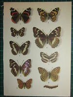 Vintage Natural Historia Estampado ~ Mariposas Mariposa Varios Rojo Admiral