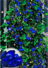 Blue Climbing Strawberry Seeds Tree Seed Delicious Fruit Seeds Blue Strawberry
