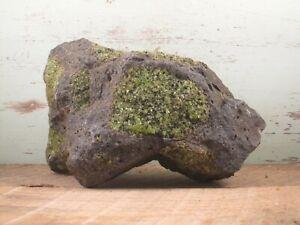 Peridot Olivine Natural Rough Crystals on Basalt 5lbs 0oz {J13CD}