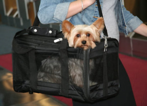 Small Pet Carrier Airline Approved Original Deluxe Soft Sided Travel Bag Medium