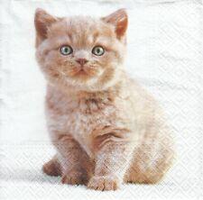 3 Lunch Papier Servietten Napkins (6-1)   Kleine Katze Cat