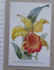 B - carte ORCHIDEE Cattleya Dowiana Aurea - publicité pharmacie Darrasse