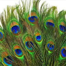 10PCs Real Natural Peacock Tail Eyes Feathers Home Decor 8-12 Inches ~10PCs~ ♫