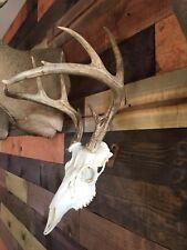 Amazeen Outdoors Flush Mount European Skull Hanger Deer Hook Metal Steel
